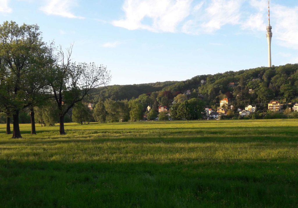 Elbwiesen Laubegast mit Blick auf Fernsehturm
